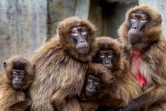 Tierfotografie: Andreas Ochsenkühn - Affen