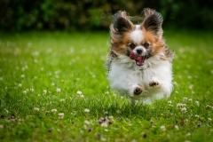 Tierfotografie: Birgit Rilk - Hund in Action