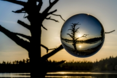 Experimentell Glaskugel Toter Baum Fohnsee (Foto: Andy Ilmberger)