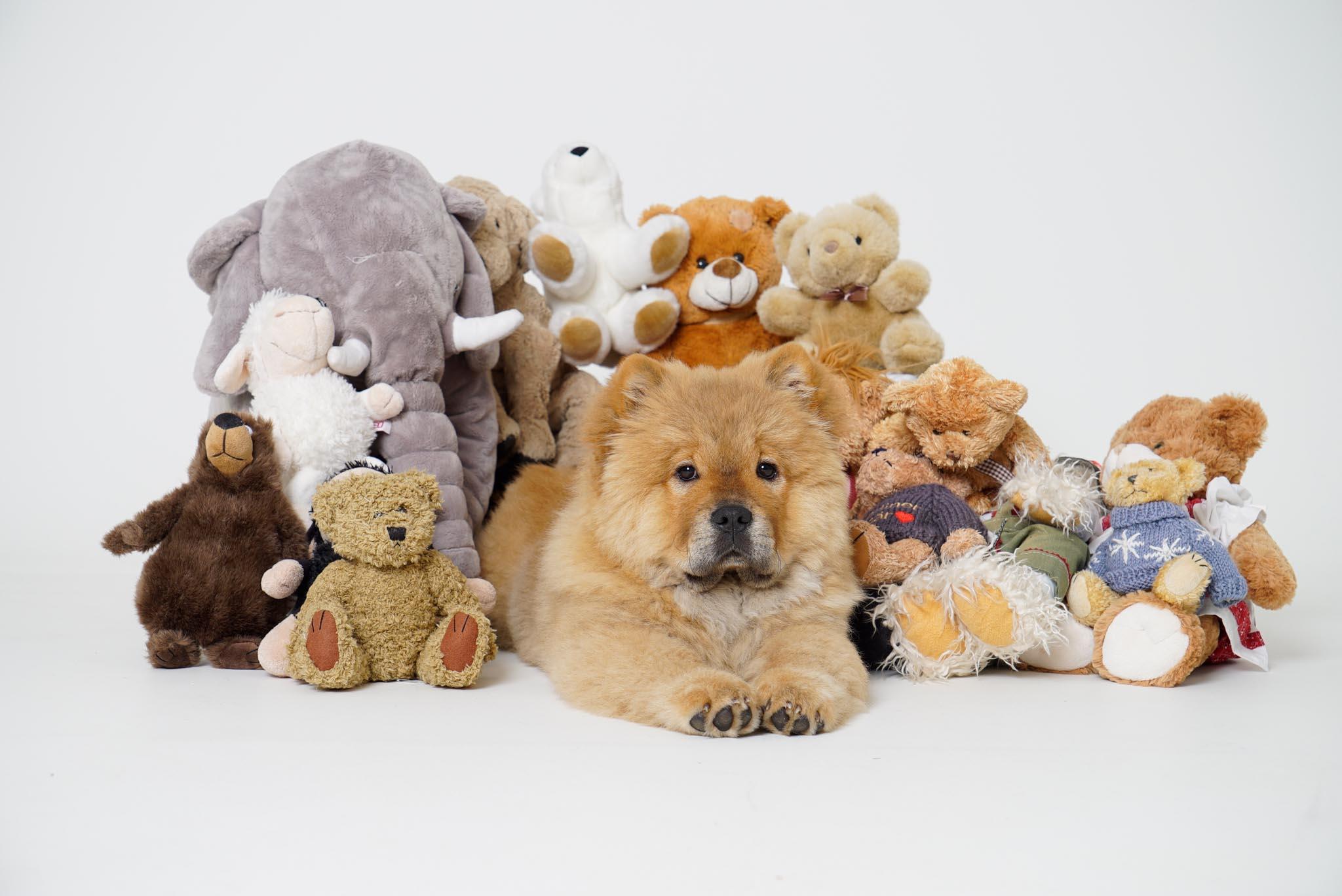 Finde das echte Tier (Foto: Andy Ilmberger)