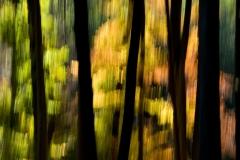 Thomas Hirschmann: Im Wald