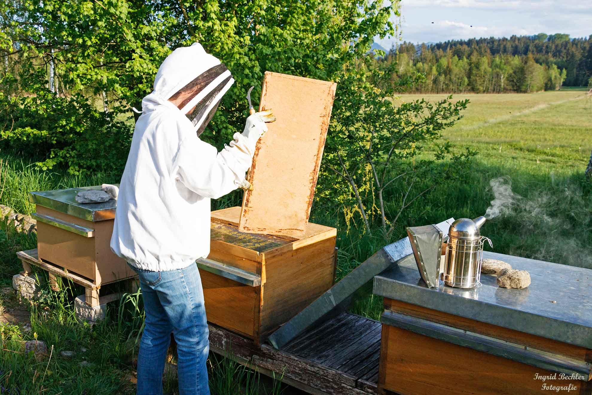 Eine Imkerin untersucht die Magazinbeute, also die Behausung des Bienenstocks (Foto: Ingrid Bechler)