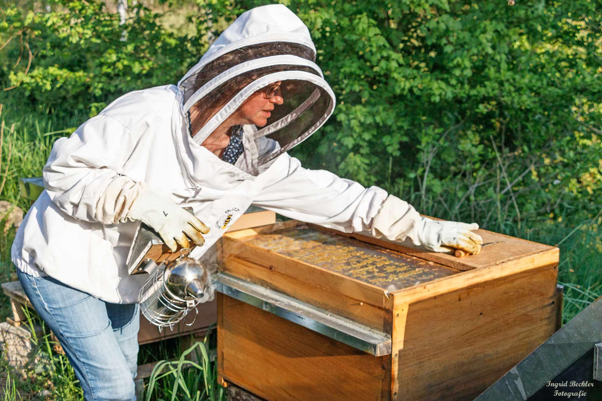 Eine Imkerin begutachtet die Arbeit ihres Bienenvolks (Foto: Ingrid Bechler)