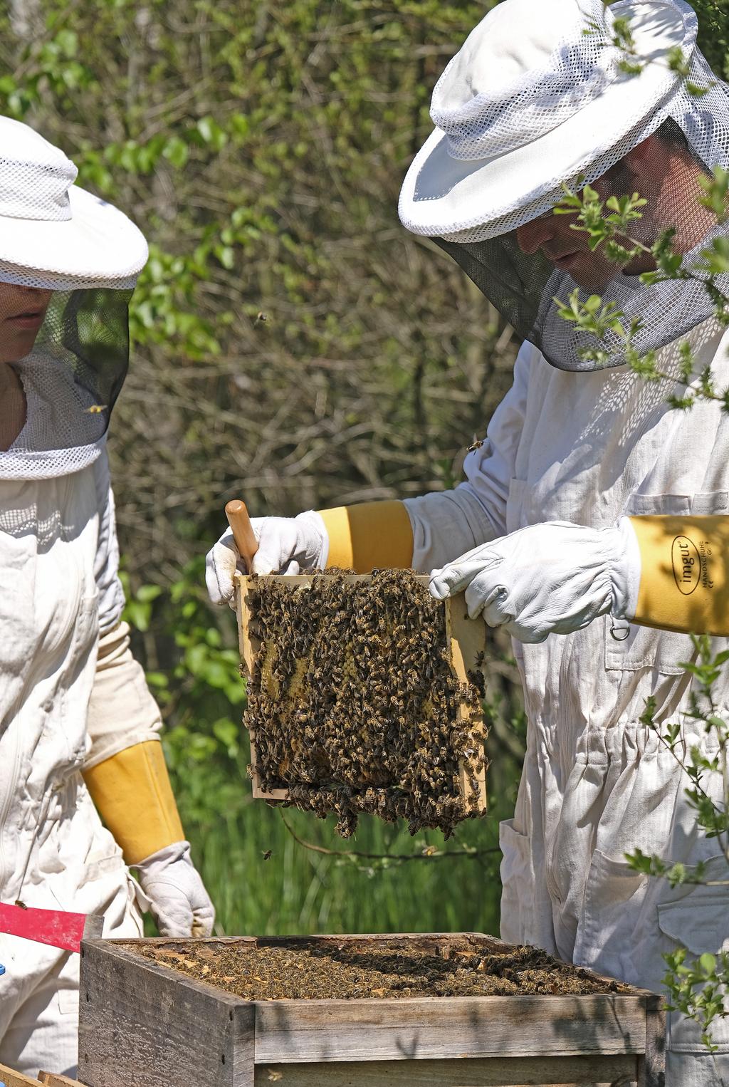 Hier wird fleißig Honig produziert (Foto: Karlheinz Steinberger)