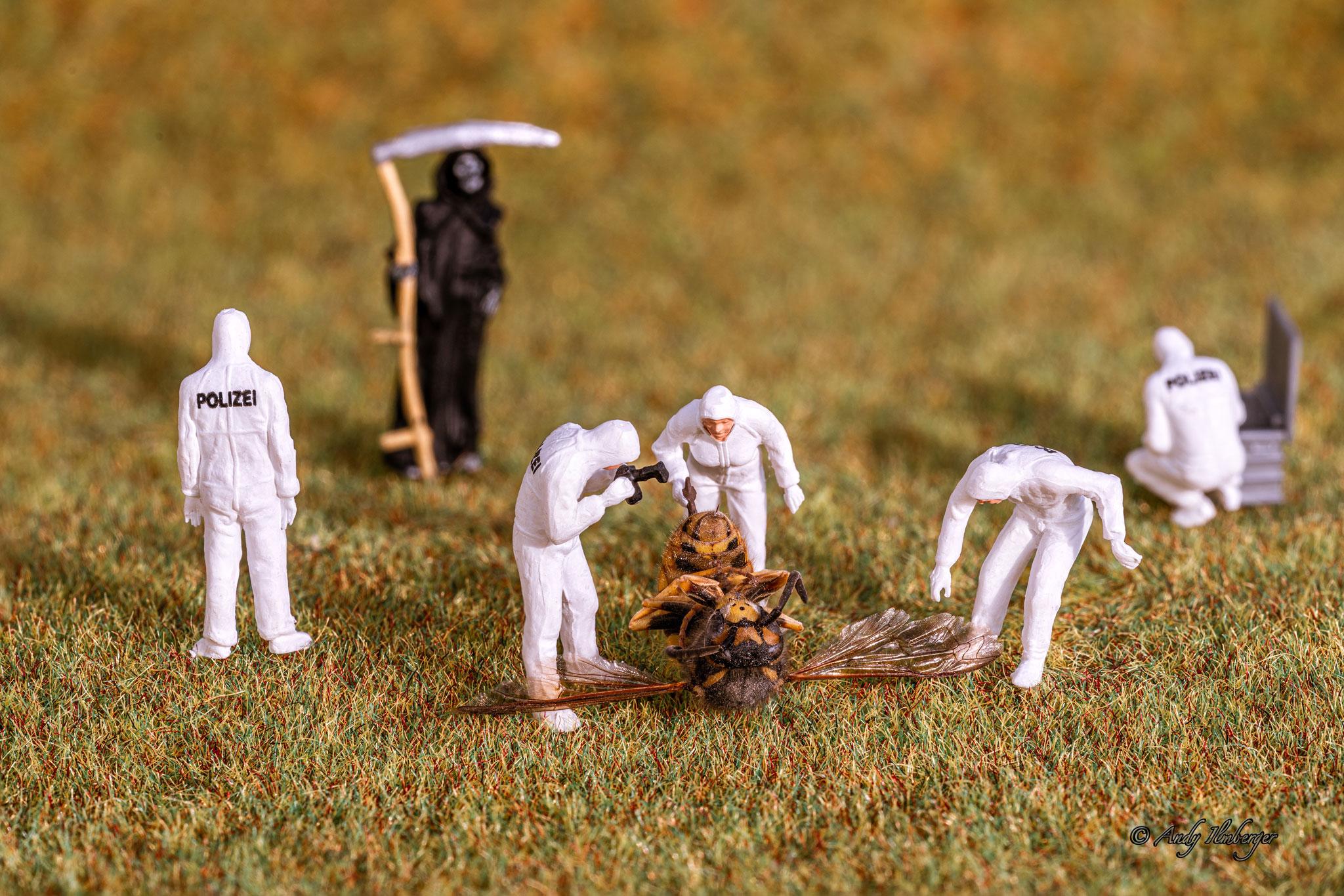 Insektensterben: Hier untersuchen Andy´s Kleine Helden den Tod einer Wespe (Foto: Andy Ilmberger)