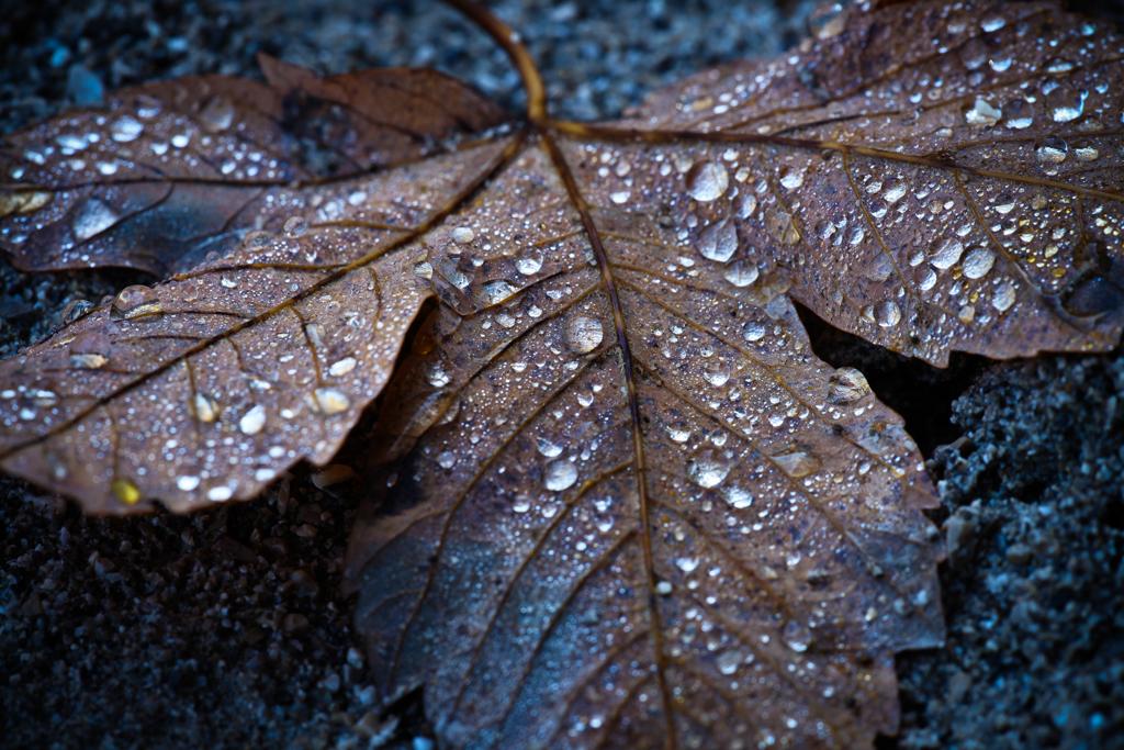 Herbst (Foto: Birgit Rilk)