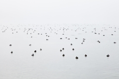 Stille (Foto: Birgit Rilk)