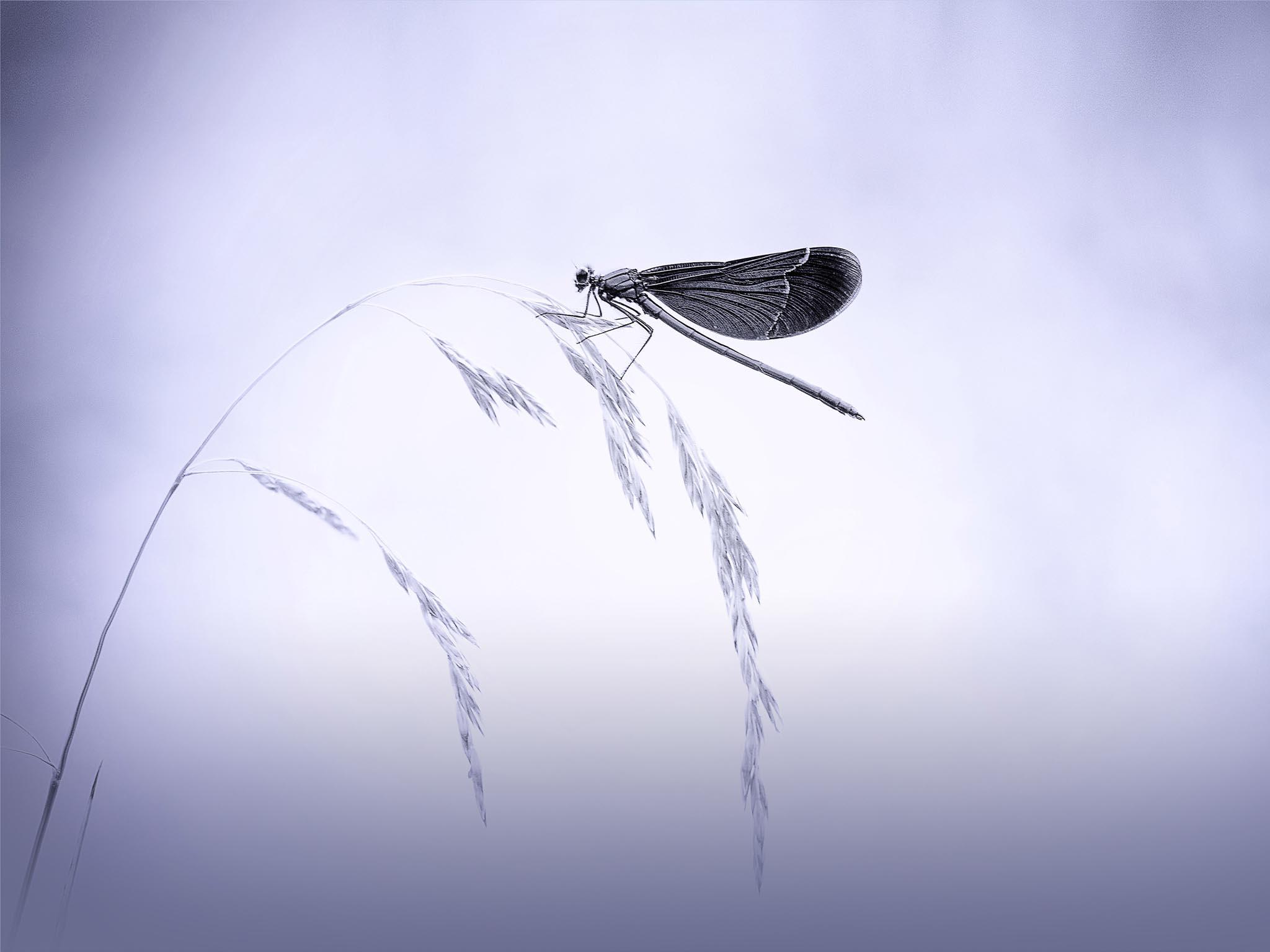 FotoclubWolfratshausen_B1_MihailowitschPia_dragonfly