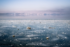 Starngerber See (Foto: Niklas Neubauer)