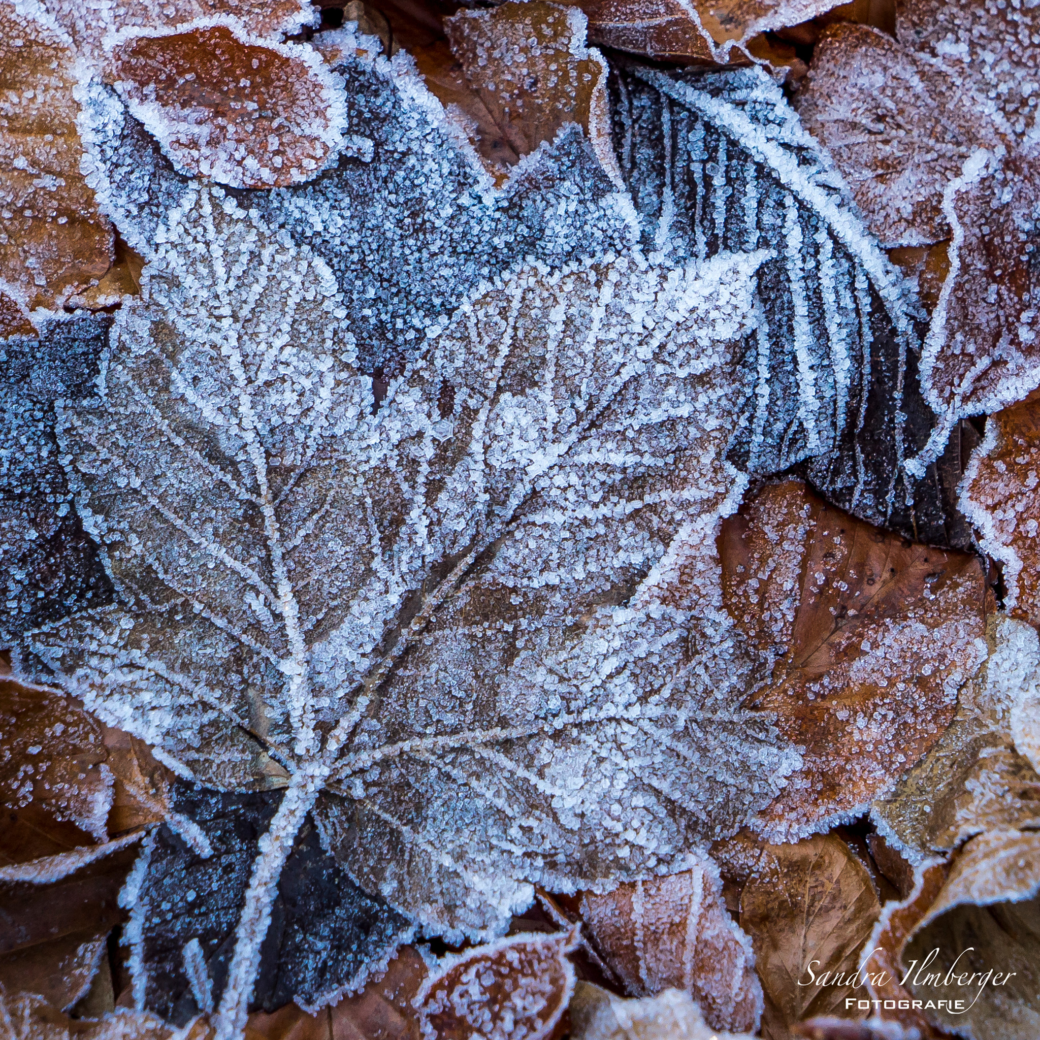 Frozen (Foto: Sandra Ilmberger)