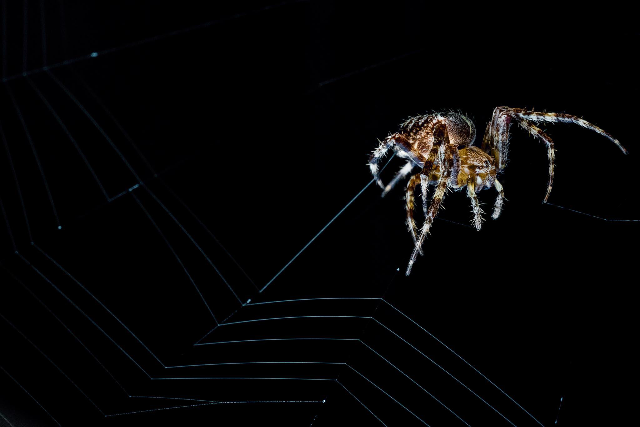 Makro Tarantula 02 (Foto: Andy Ilmberger)
