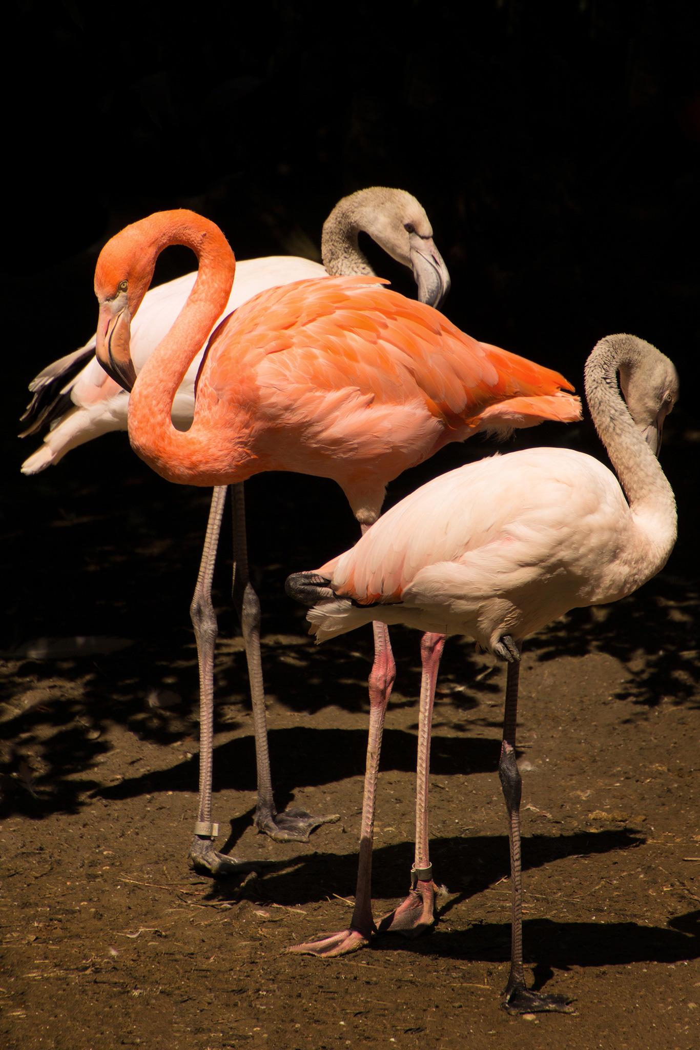 Flamingos (Foto: Birgit Kindsmüller)