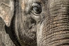 Asiatischer Elefant (Foto: Sandra Ilmberger)