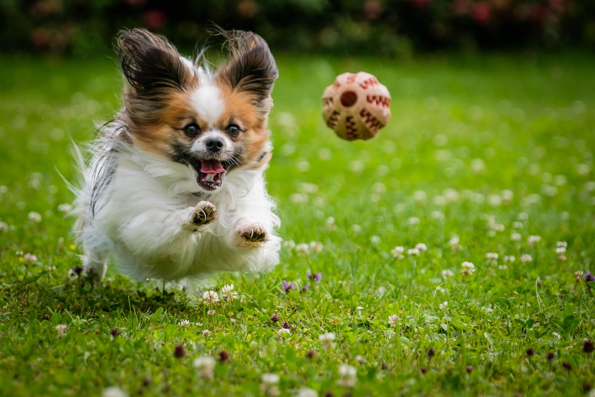 Spielender Hund von Birgit Rilk