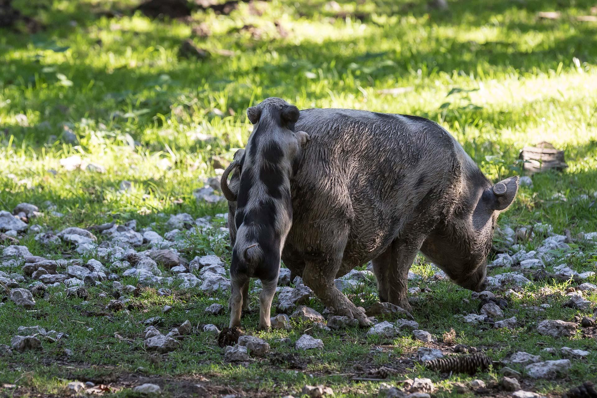 Schweinerei von Johannes Schlandt