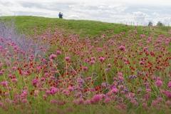 Blumenwiese von Pia Mihailowitsch