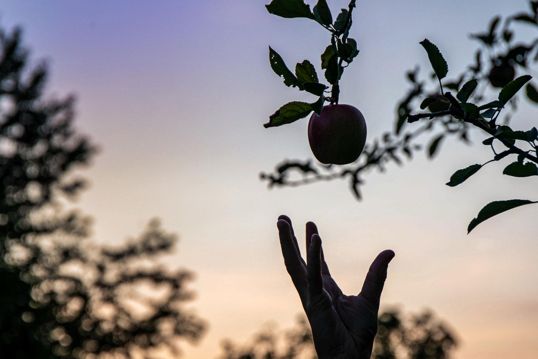 Etwas fruchtig Gesundes auf der Hand  von Andreas Ochsenkühn