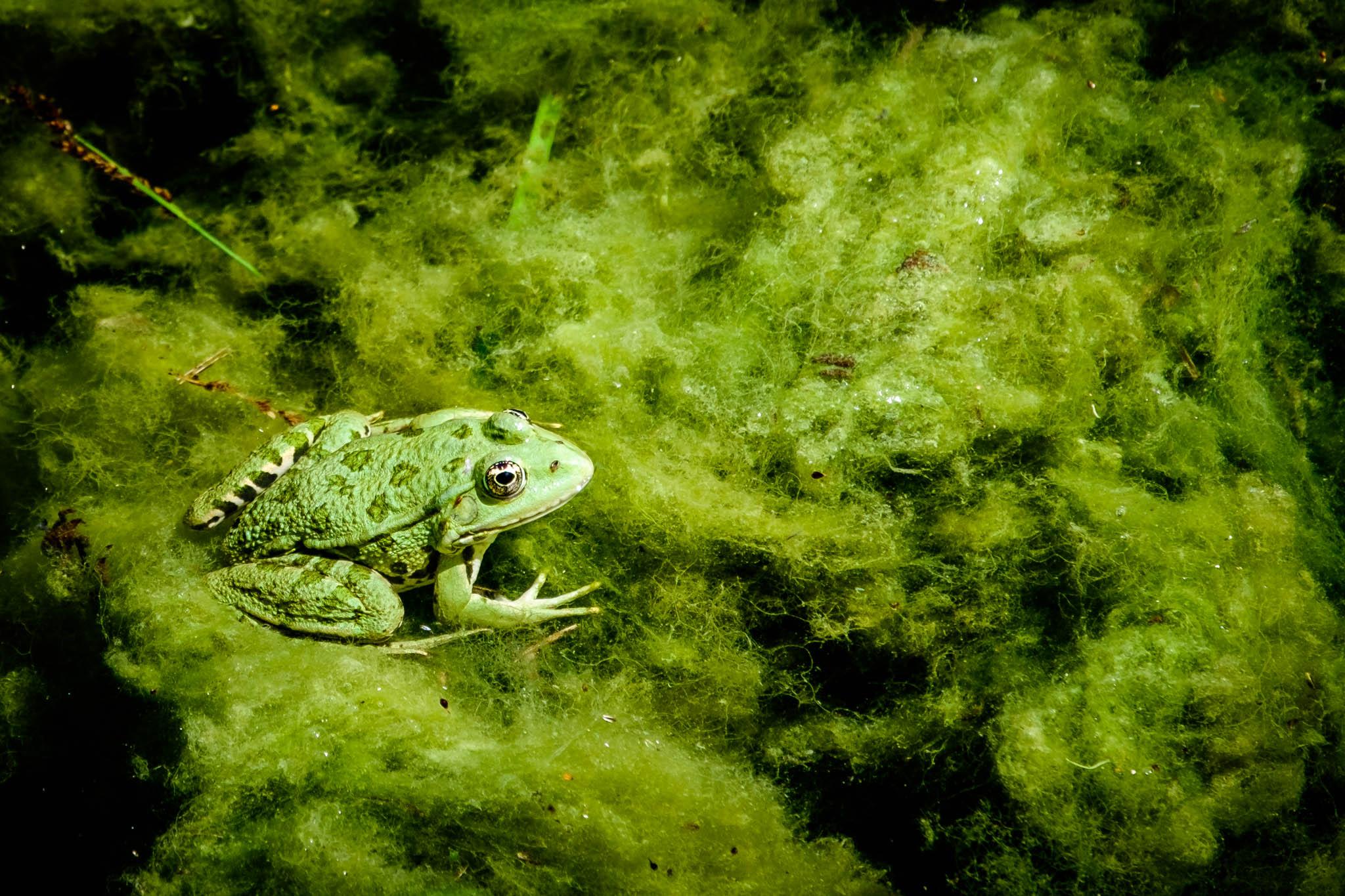 Ein Frosch von Birgit Rilk