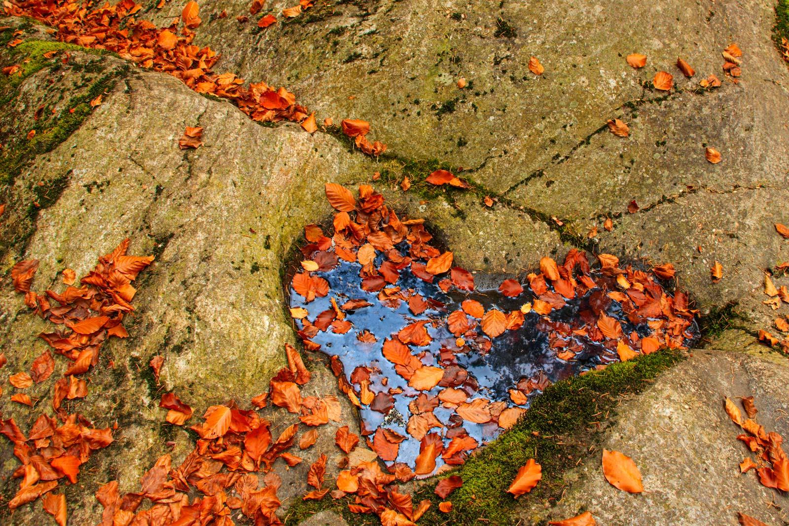 Herbstherz von Ingrid Becheler