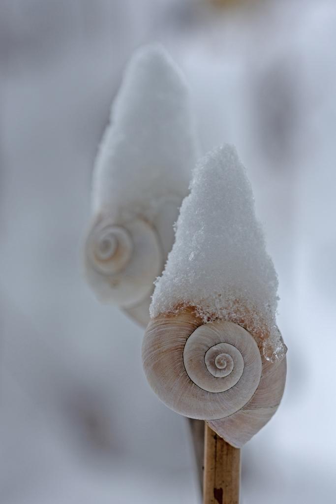Winterendspurt von Karlheinz Steinberger