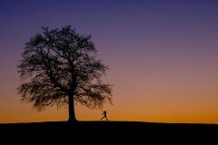 Münsinger Eiche im Sonnenuntergang von Birgit Rilk