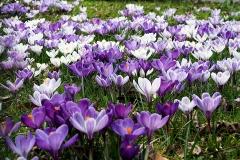 Frühlingswiese von Tanja Schulte