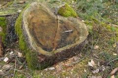 Baumstumpf-Herz von Ute Sauer
