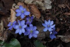 Lederblümchen von Ute Sauer