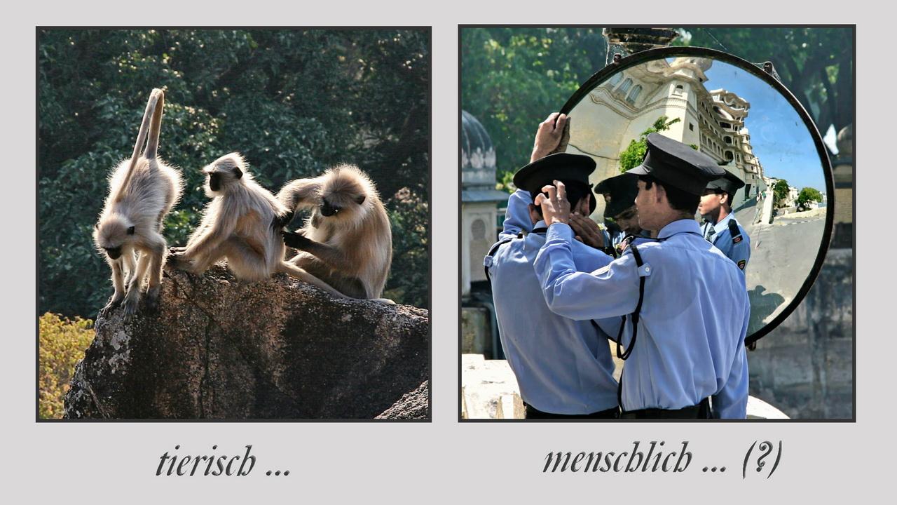 """Bildpaar """"tierisch - menschlich... (?)"""" (Foto: Klaus-Peter Volkmann)"""