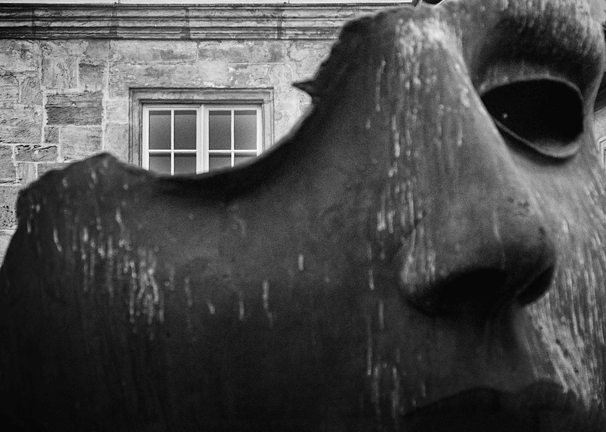 Bisoziieren (Foto: Pia Mihailowitsch)