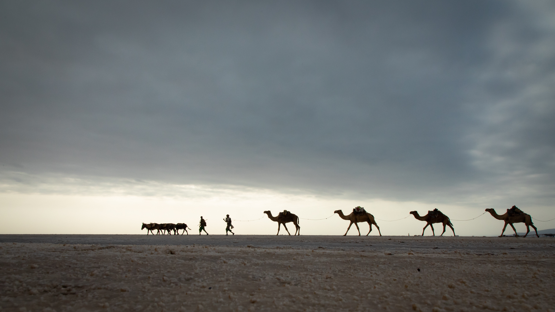 Salz-Karavane in der Danakil-Wüste (Foto: Peter Schreyer)