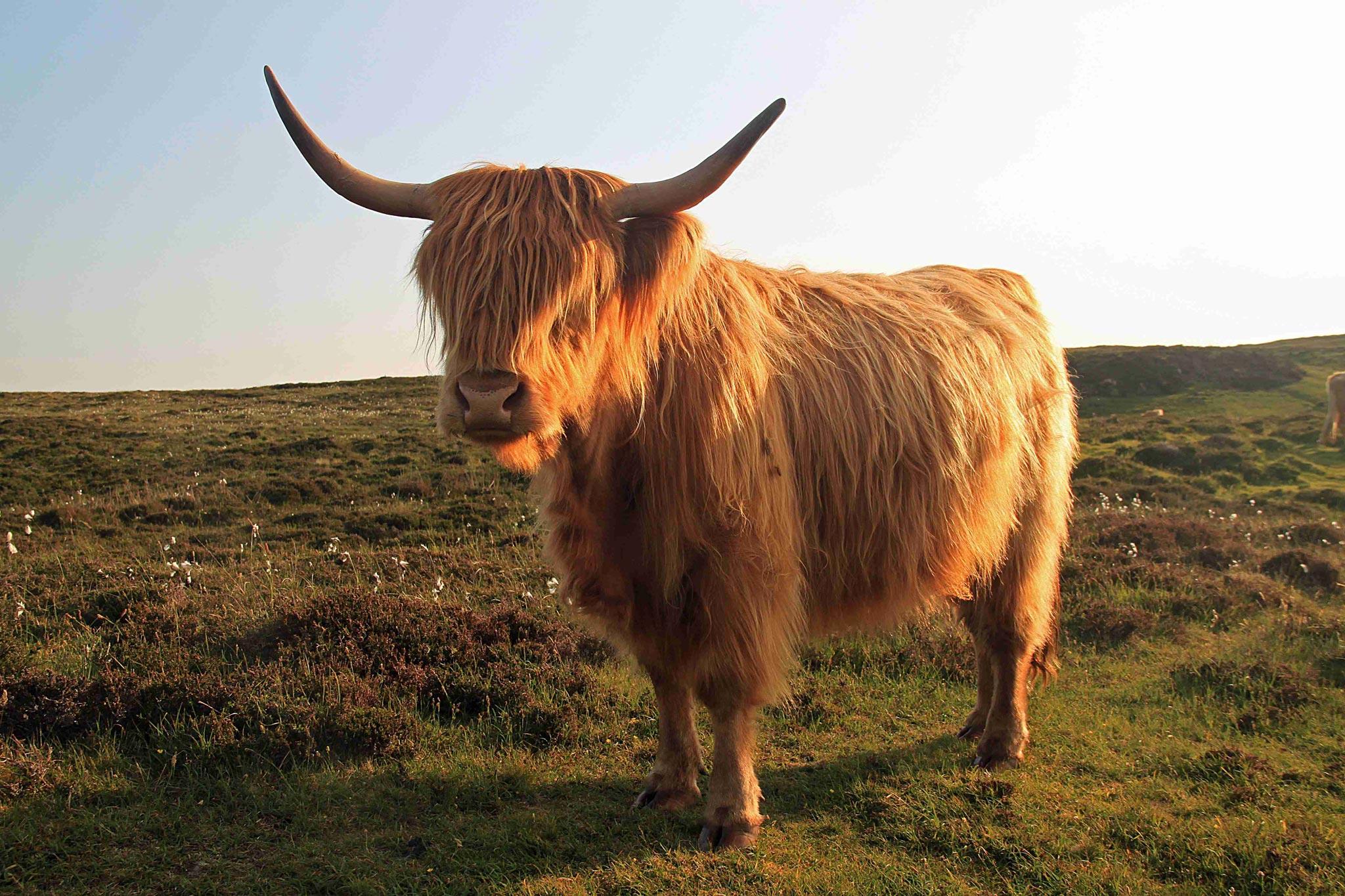 Schottland-1_web