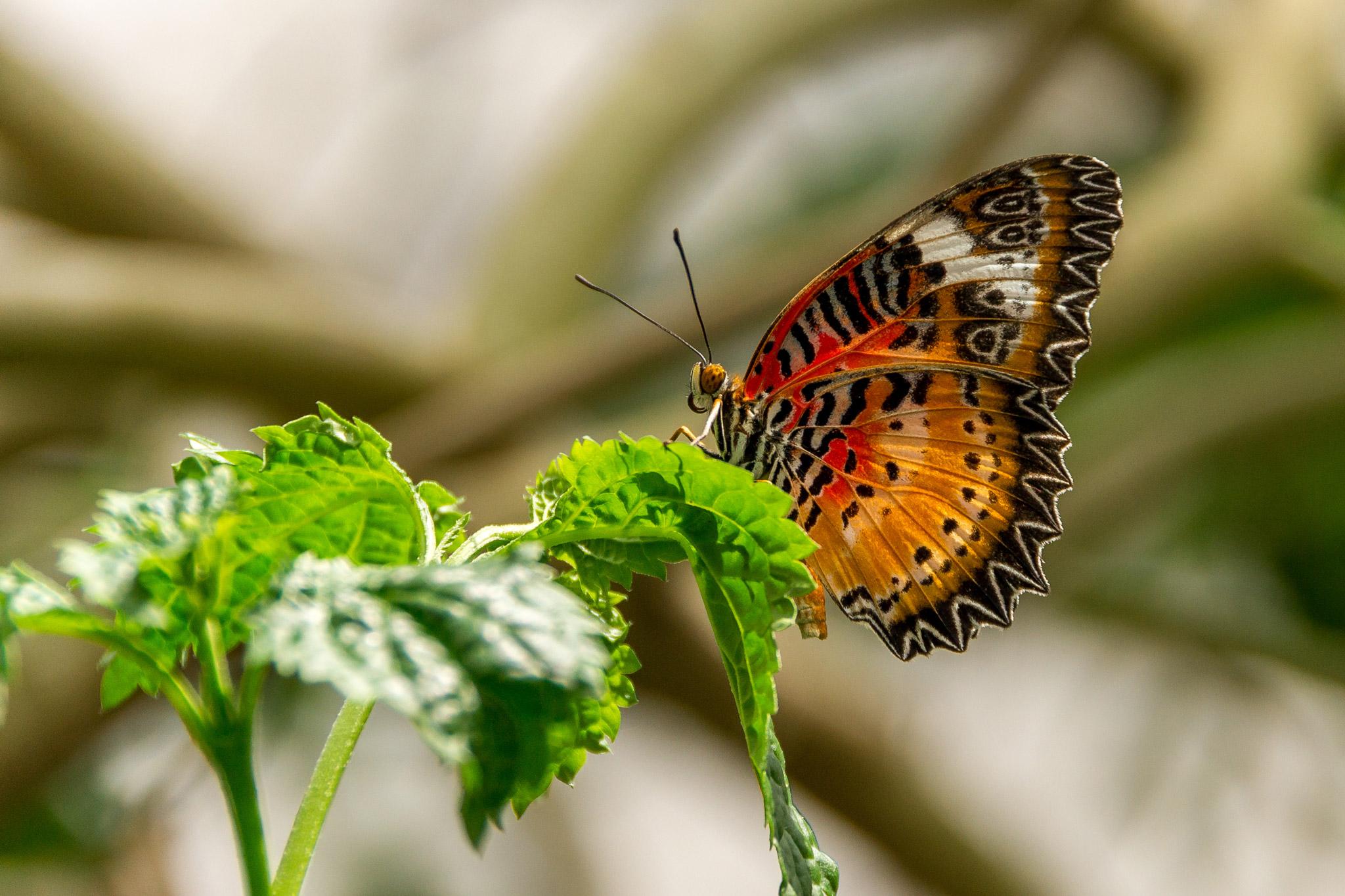Farbwelten: Orange (Foto: Sandra Ilmberger)