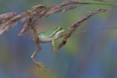 Ein akrobatischer Frosch von Thomas Hirschmann