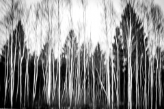Platz 13 - Ghost-Forest - Sandra Ilmberger