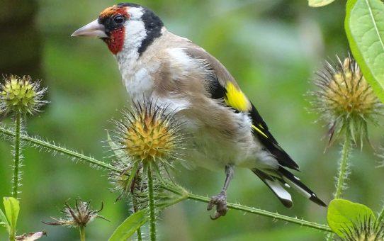 Nah-, Makro- und Vogelfotografie