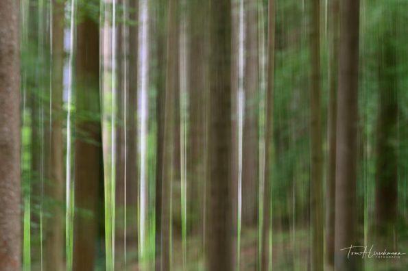 Wald, Tom Hirschmann