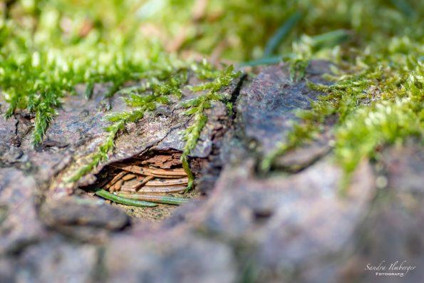Unter der Baumrinde, Sandra Ilmberger